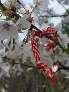Sofia blossoms