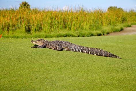 Golf Hazzard